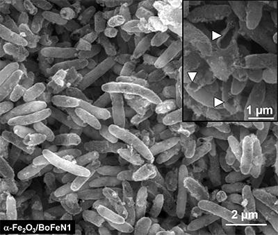 Bacteries_Batteries_Durables